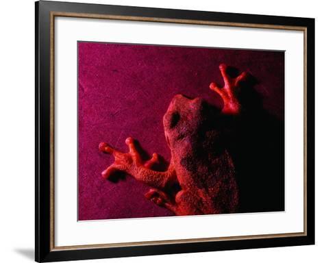 Costa Rican Tree Frog-Dan Gair-Framed Art Print