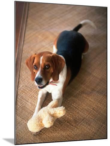 Beagle Dog with His Stuffed Animal-Lonnie Duka-Mounted Photographic Print
