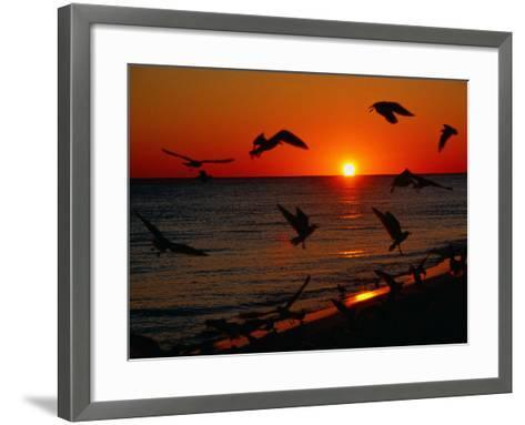 Seagulls FLying Over the Beach at Sunset, FL-Ken Glaser-Framed Art Print