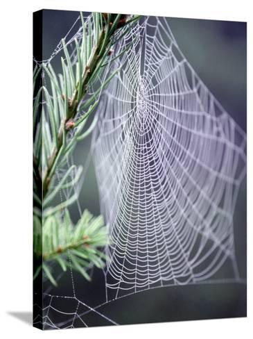 Spider Webs and Dew Drops-Jim Corwin-Stretched Canvas Print