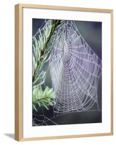 Spider Webs and Dew Drops-Jim Corwin-Framed Art Print