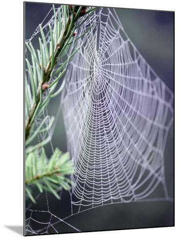 Spider Webs and Dew Drops-Jim Corwin-Mounted Photographic Print