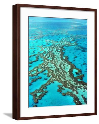 Great Barrier Reef, Queensland, Australia-Peter Walton-Framed Art Print