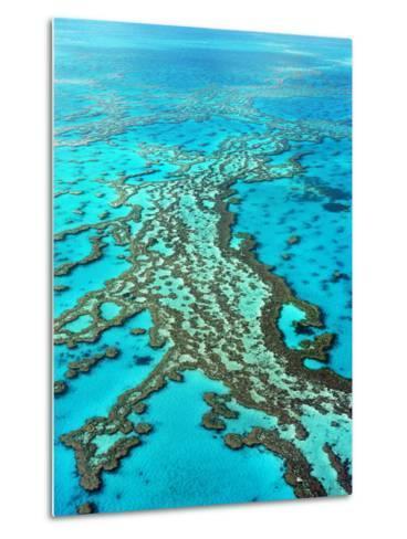 Great Barrier Reef, Queensland, Australia-Peter Walton-Metal Print