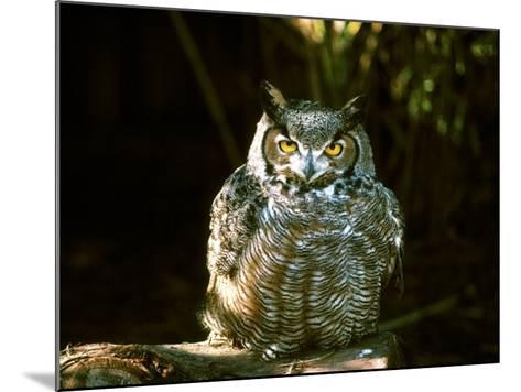 Great Horned Owl-Jerry Koontz-Mounted Photographic Print