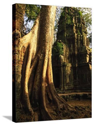 Angkor, Ta Prohm, 400-year-old Tree, Cambodia-Walter Bibikow-Stretched Canvas Print