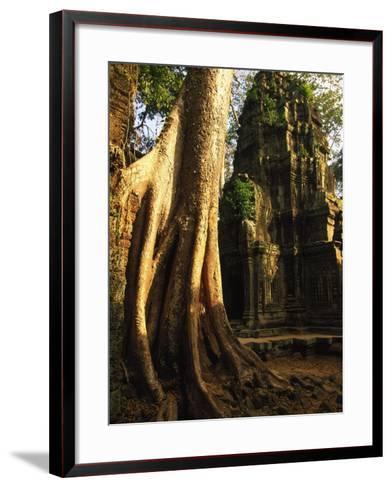 Angkor, Ta Prohm, 400-year-old Tree, Cambodia-Walter Bibikow-Framed Art Print