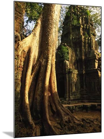 Angkor, Ta Prohm, 400-year-old Tree, Cambodia-Walter Bibikow-Mounted Photographic Print