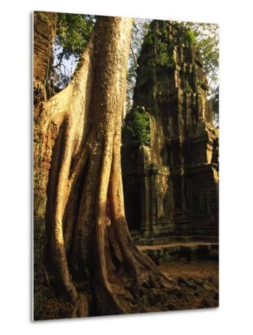 Angkor, Ta Prohm, 400-year-old Tree, Cambodia-Walter Bibikow-Metal Print