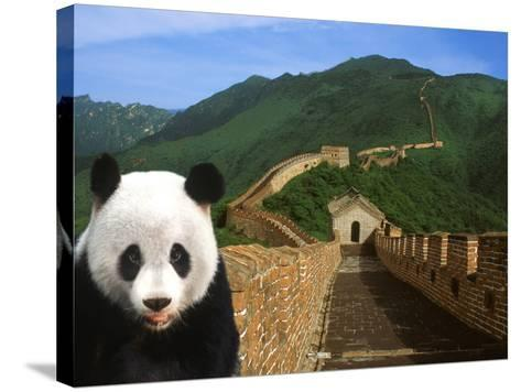 Panda and Great Wall of China-Bill Bachmann-Stretched Canvas Print