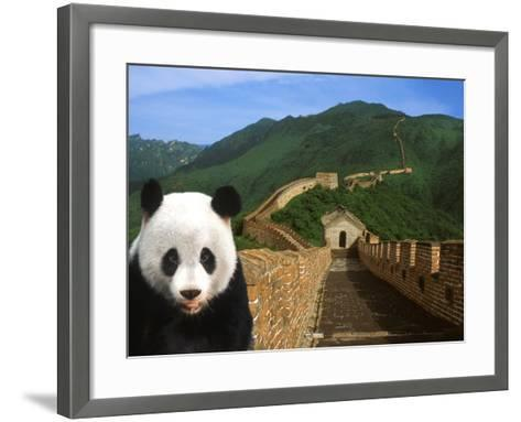Panda and Great Wall of China-Bill Bachmann-Framed Art Print