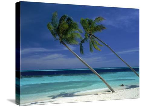 Palm Trees on Tropical Beach, Maldives-Frank Chmura-Stretched Canvas Print