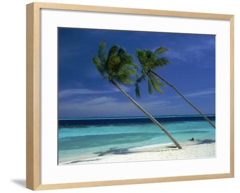 Palm Trees on Tropical Beach, Maldives-Frank Chmura-Framed Art Print