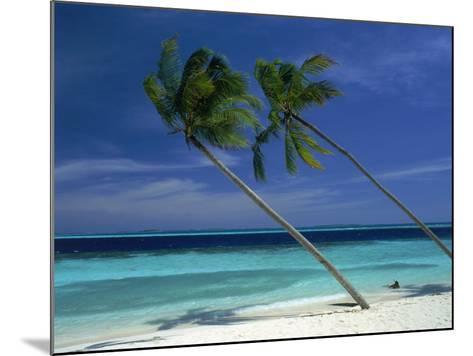 Palm Trees on Tropical Beach, Maldives-Frank Chmura-Mounted Photographic Print