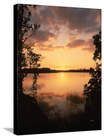 Sunset at Paurotis Pond, Everglades National Park, FL-David Davis-Stretched Canvas Print