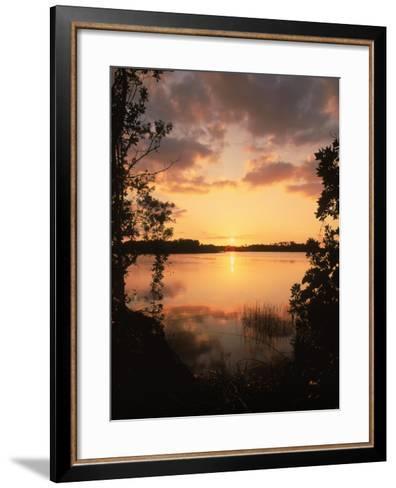 Sunset at Paurotis Pond, Everglades National Park, FL-David Davis-Framed Art Print