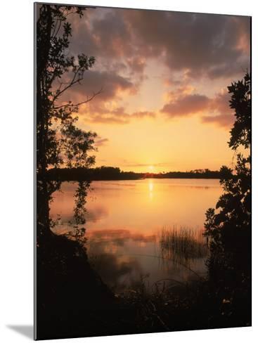 Sunset at Paurotis Pond, Everglades National Park, FL-David Davis-Mounted Photographic Print
