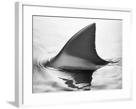 Shark Fin-Howard Sokol-Framed Art Print