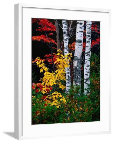 Fall Color, Old Forge Area, Adirondack Mountains, NY-Jim Schwabel-Framed Art Print