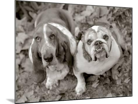 Two Dogs Looking Up-Gareth Rockliffe-Mounted Photographic Print