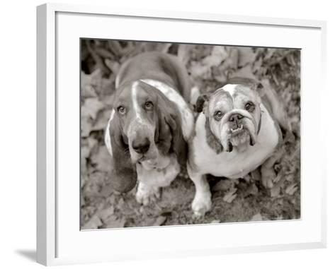 Two Dogs Looking Up-Gareth Rockliffe-Framed Art Print