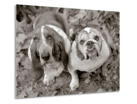 Two Dogs Looking Up-Gareth Rockliffe-Metal Print