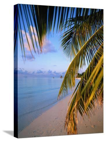 Ari Atoll, White Sands Island and Resort-Angelo Cavalli-Stretched Canvas Print