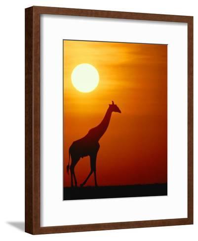 Silhouette of a Giraffe at Sunrise-Medford Taylor-Framed Art Print