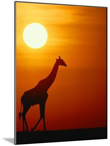 Silhouette of a Giraffe at Sunrise-Medford Taylor-Mounted Photographic Print