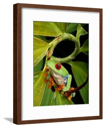 A Red-Eyed Tree Frog-George Grall-Framed Art Print