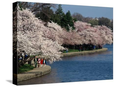 Cherry Blossom Festival on the Tidal Basin-Richard Nowitz-Stretched Canvas Print