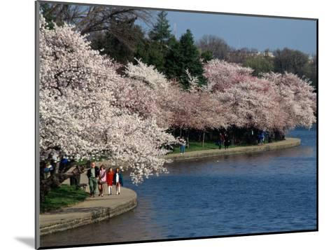 Cherry Blossom Festival on the Tidal Basin-Richard Nowitz-Mounted Photographic Print