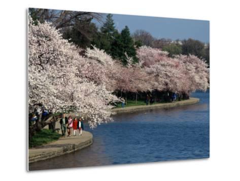 Cherry Blossom Festival on the Tidal Basin-Richard Nowitz-Metal Print