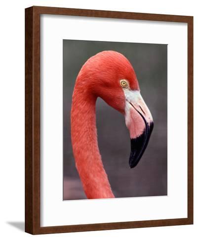 Flamingo-Medford Taylor-Framed Art Print