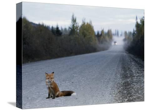 Red Fox on the Cassier Highway-Rich Reid-Stretched Canvas Print