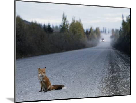 Red Fox on the Cassier Highway-Rich Reid-Mounted Photographic Print