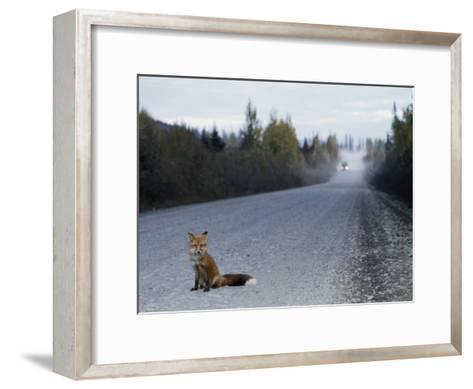 Red Fox on the Cassier Highway-Rich Reid-Framed Art Print