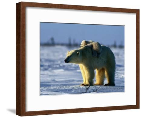 Polar Bear with Her Young-Norbert Rosing-Framed Art Print