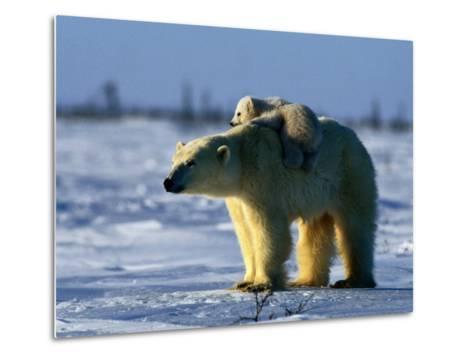 Polar Bear with Her Young-Norbert Rosing-Metal Print