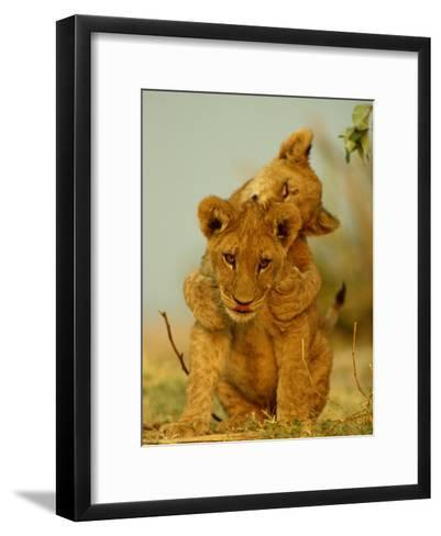 Two African Lion Cubs Playing-Beverly Joubert-Framed Art Print