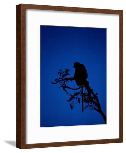 Silhouetted Proboscis Monkey (Nasalis Larvatus)-Mattias Klum-Framed Art Print