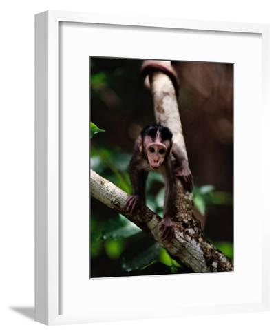 Close View of a Baby Macaque-Mattias Klum-Framed Art Print