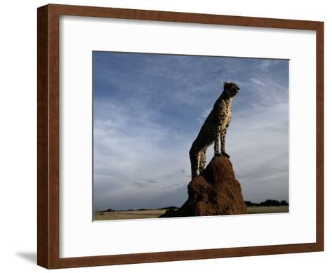 An African Cheetah Guards His Territory from the Top of a Large Termite Mound-Chris Johns-Framed Art Print