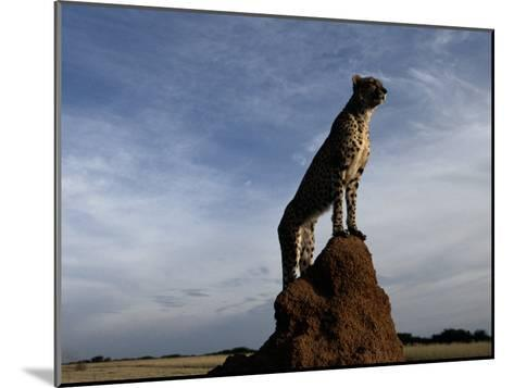An African Cheetah Guards His Territory from the Top of a Large Termite Mound-Chris Johns-Mounted Photographic Print