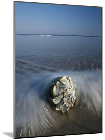 A Conch Shell Washed up on Shore-George Grall-Mounted Photographic Print