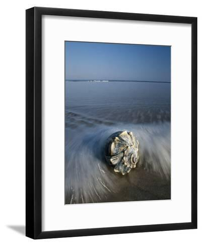 A Conch Shell Washed up on Shore-George Grall-Framed Art Print