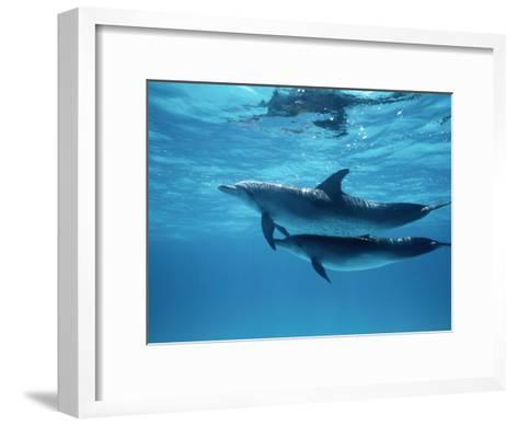 A Pair of Spotted Dolphins-Wolcott Henry-Framed Art Print