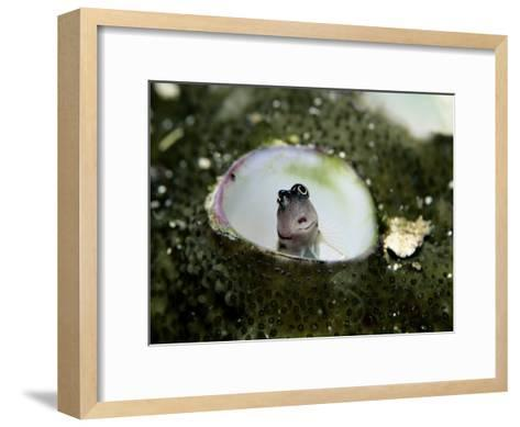 A Close-View a Goby Fish in a Sea Anemone-Wolcott Henry-Framed Art Print