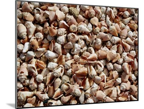 A Sea of Conch Shells Covers the Beach on Margarita Island-Wolcott Henry-Mounted Photographic Print