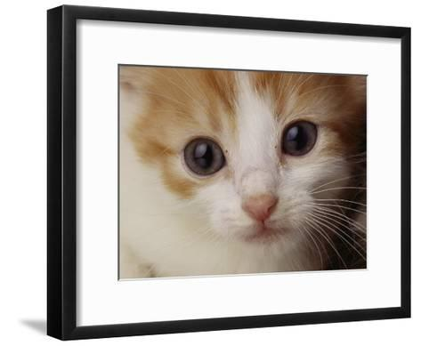 A Close View of a Cat-Michael Nichols-Framed Art Print